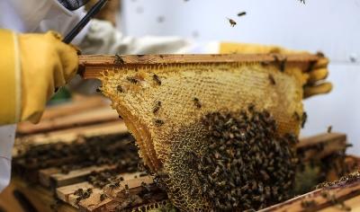 5. Jarní seminář nástavkového včelaření